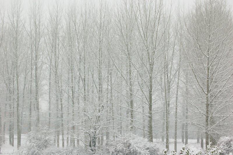Alberi in neve fotografia stock