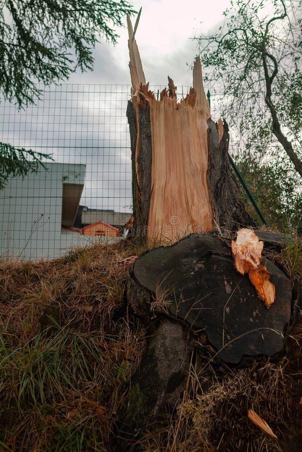 Alberi nocivi da una tempesta locale del vento fotografia stock
