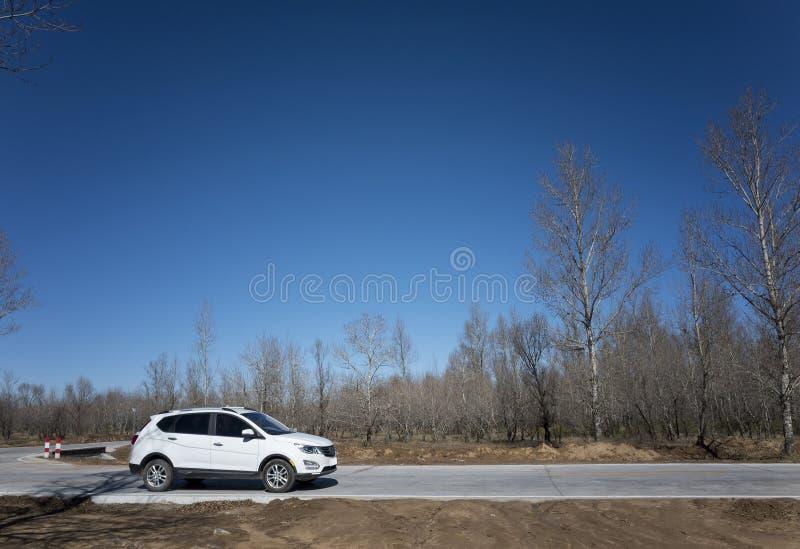 Alberi nudi in autunno tardo immagine stock libera da diritti