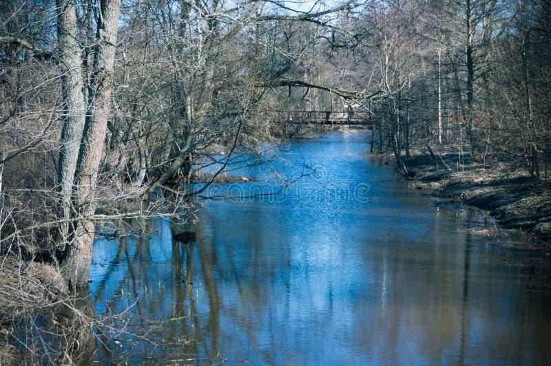 Alberi nudi dal fiume in primavera fotografia stock libera da diritti