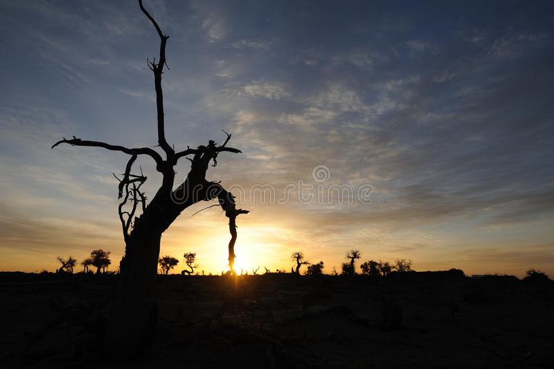 Alberi nudi nell'alba di autunno fotografia stock libera da diritti