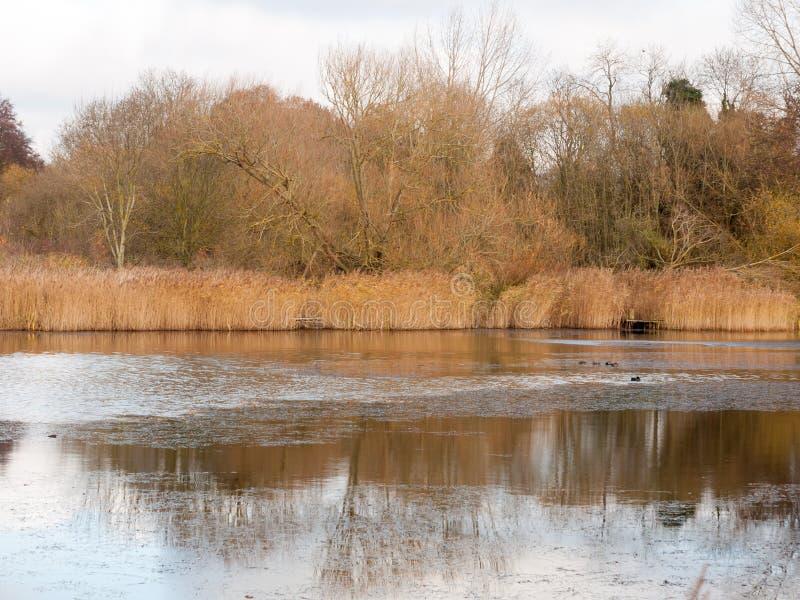 Alberi nuvolosi di marrone del lago del cielo bianco di autunno ed alcuni uccelli su sur fotografia stock