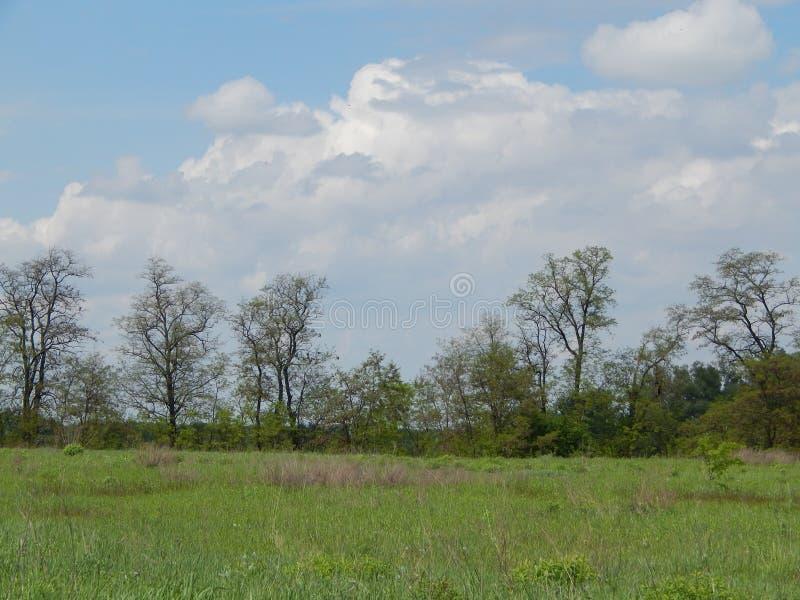 Alberi raramente piantati contro un cielo blu immagini stock libere da diritti
