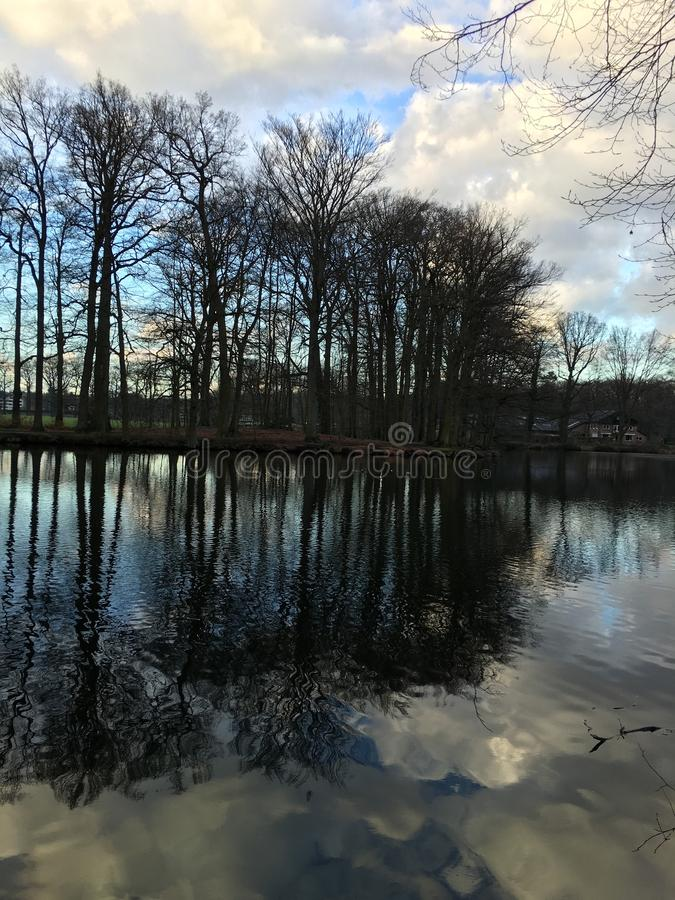 Alberi riflessi in acqua fotografie stock