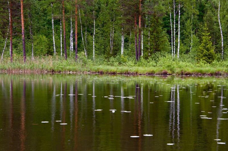 Alberi riflessi in lago fotografia stock libera da diritti