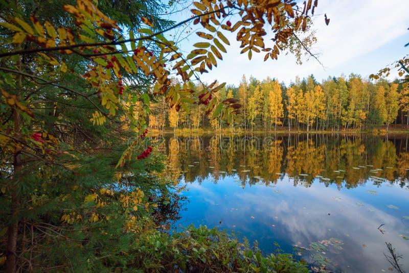 Alberi riflessi nel lago Autumn Landscape immagini stock libere da diritti