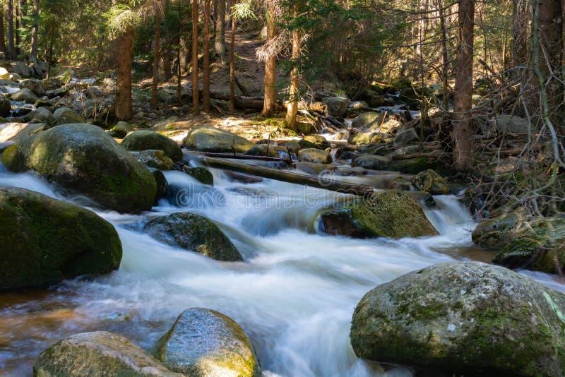 Alberi rocciosi di gomma e della torrente montano nel fondo fotografia stock libera da diritti