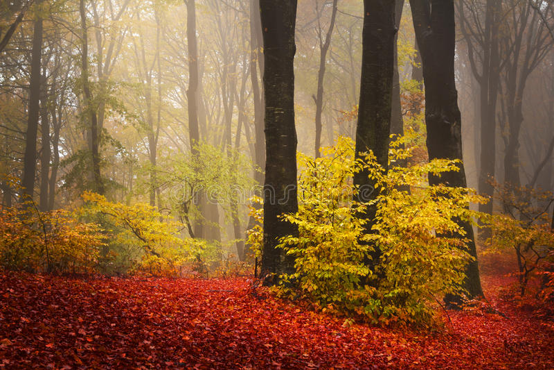 Alberi rossi nella foresta fotografia stock libera da diritti