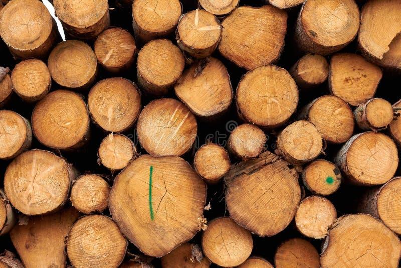 Alberi segati I ceppi di legno hanno impilato Gli alberi abbattuti di legno sono sta fotografia stock