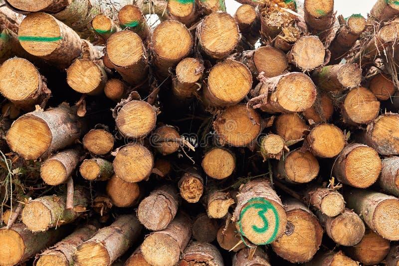 Alberi segati I ceppi di legno hanno impilato Gli alberi abbattuti di legno sono sta immagine stock