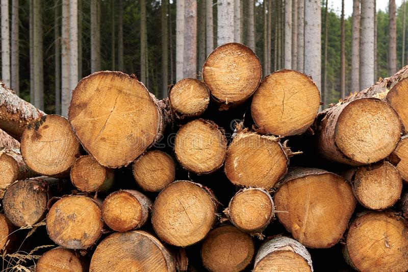 Alberi segati I ceppi di legno hanno impilato Gli alberi abbattuti di legno sono sta fotografie stock