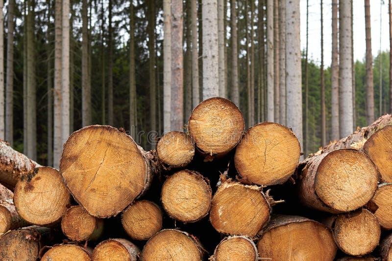 Alberi segati I ceppi di legno hanno impilato Gli alberi abbattuti di legno sono sta immagine stock libera da diritti