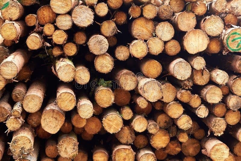 Alberi segati I ceppi di legno hanno impilato Gli alberi abbattuti di legno sono sta fotografie stock libere da diritti