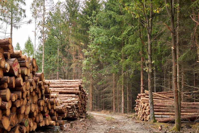 Alberi segati I ceppi di legno hanno impilato Legname impilato nella foresta T immagine stock