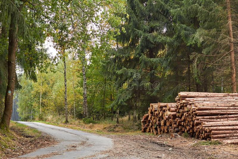 Alberi segati I ceppi di legno hanno impilato Legname impilato nella foresta T immagine stock libera da diritti