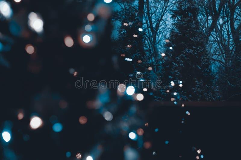 Alberi sempreverdi innevati alla notte con l'albero di Natale illuminato defocused nella priorità alta immagine stock