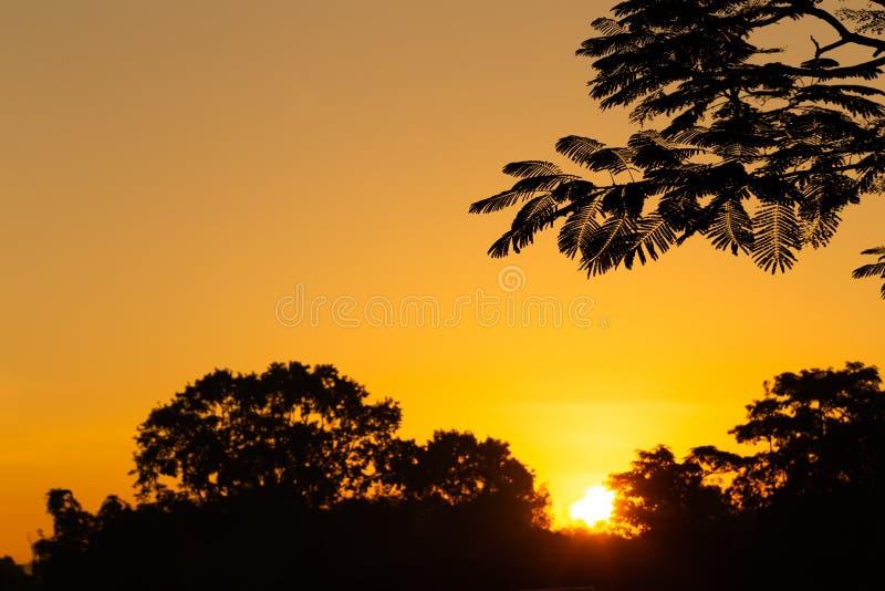 Alberi senza foglie ad alba fotografie stock