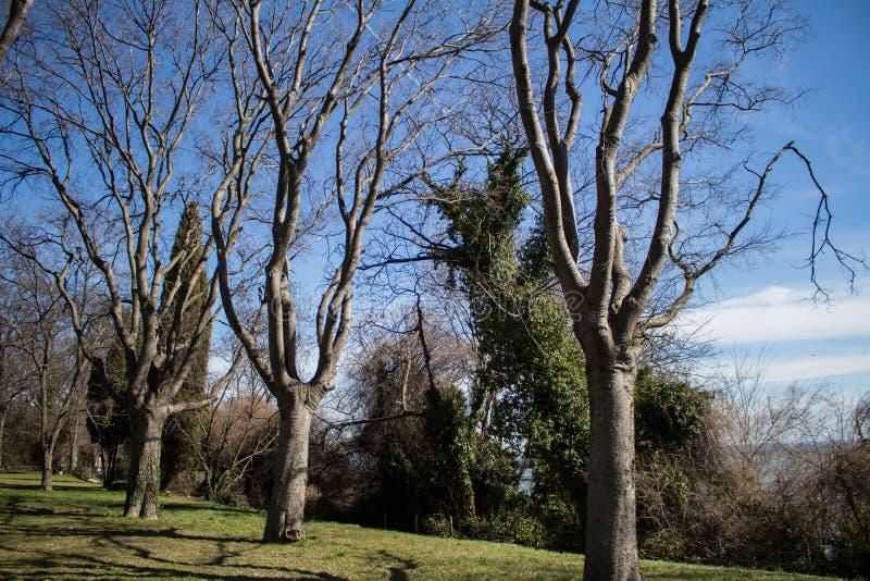 Alberi senza foglie che aspettano la molla fotografia stock