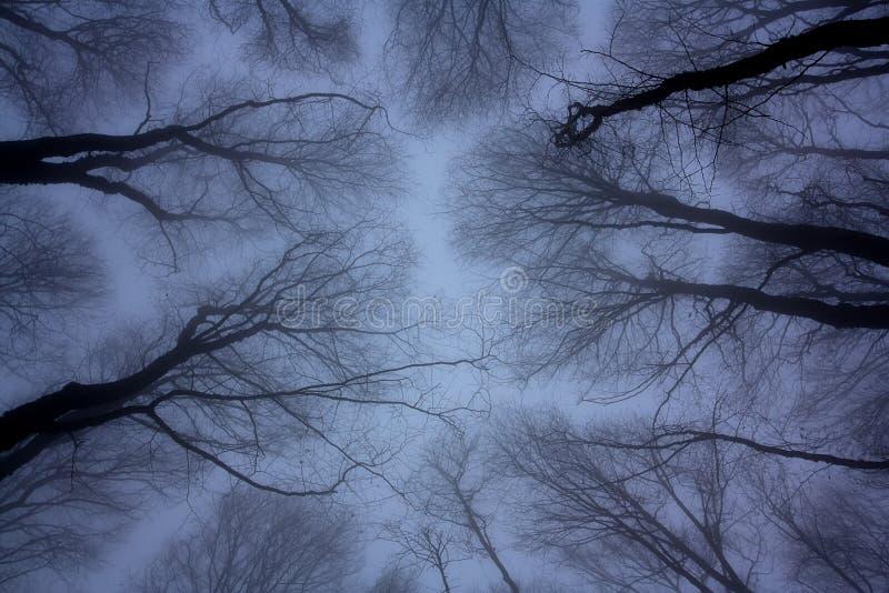 Alberi sfrondati sotto il cielo scuro immagine stock