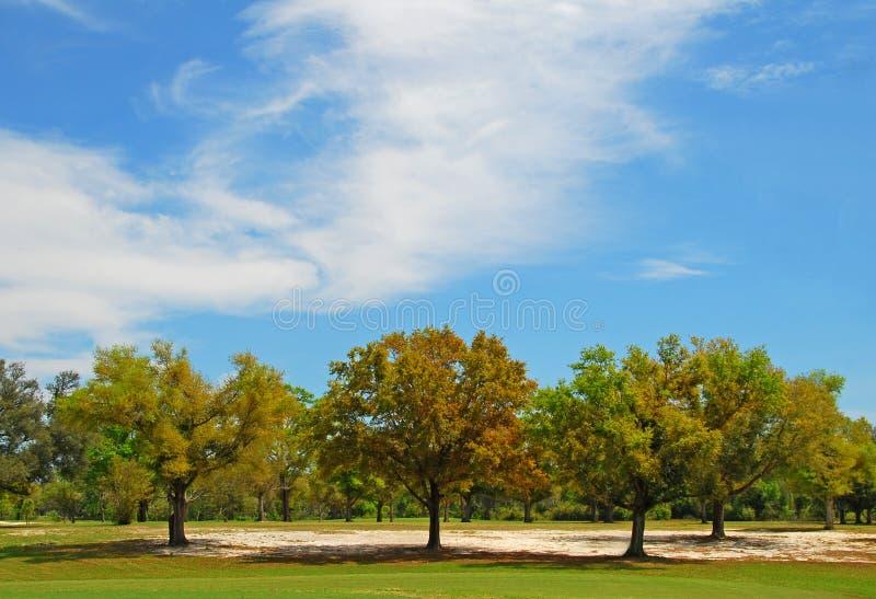 Alberi sotto il cielo grazioso fotografie stock