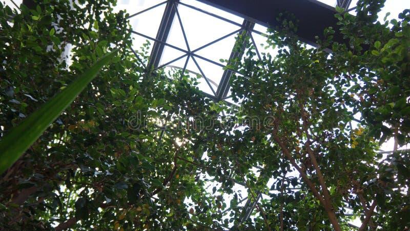 Alberi sotto la cupola della città fotografie stock