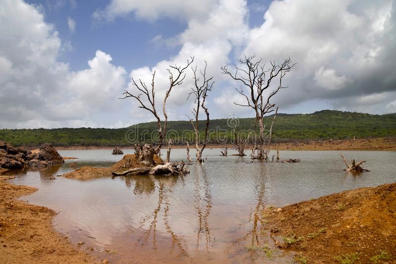 Alberi sterili in lago fotografia stock libera da diritti
