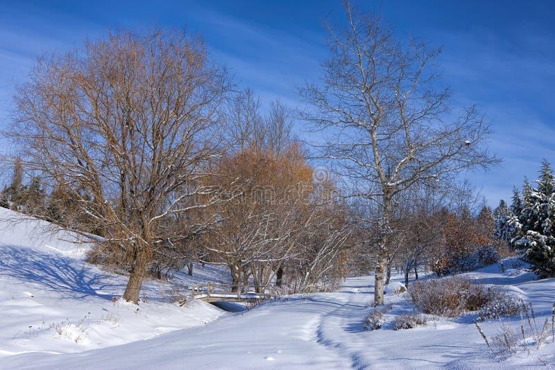 Alberi sterili in parco nevoso fotografia stock
