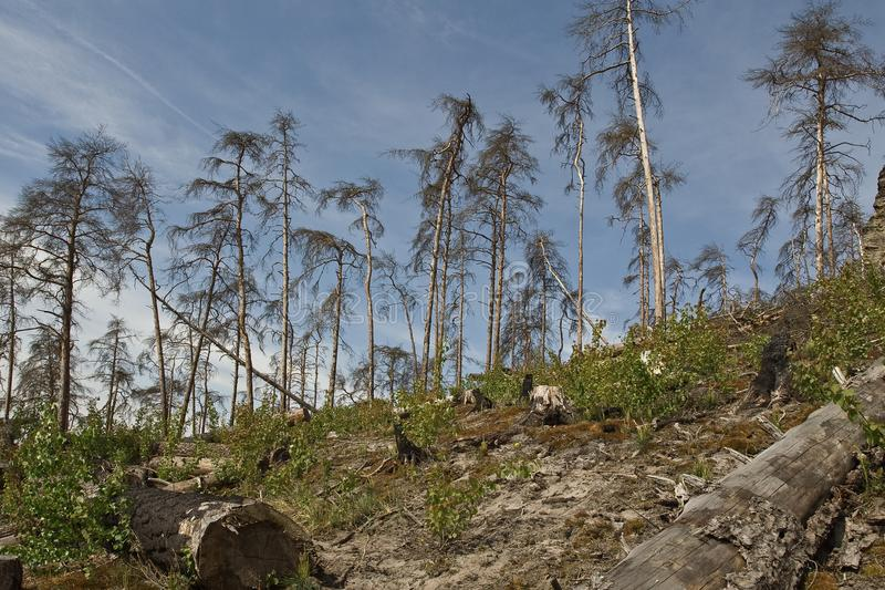 Alberi stretti sul pendio roccioso fotografia stock