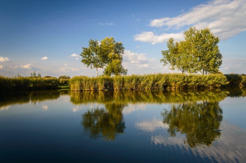 Alberi sul lago fotografia stock