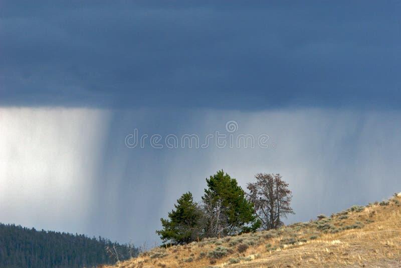 Alberi sul pendio di collina e sulla tempesta di raccolta fotografia stock libera da diritti