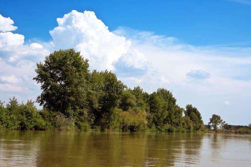 Alberi sulla riva del fiume fotografia stock