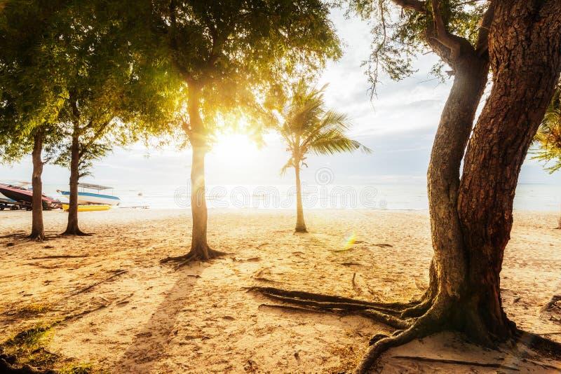 Alberi sulla spiaggia e sull'alba La barca è sulla sabbia vicino all'acqua di mare immagine stock