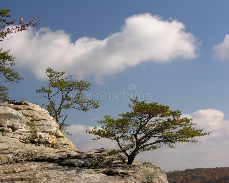 Alberi sulla sporgenza della roccia fotografia stock