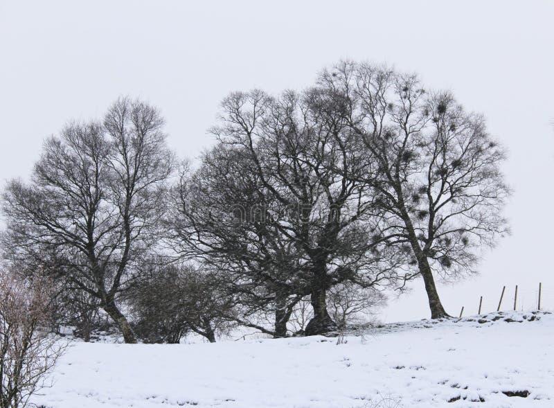 Alberi sulla stagione invernale immagine stock
