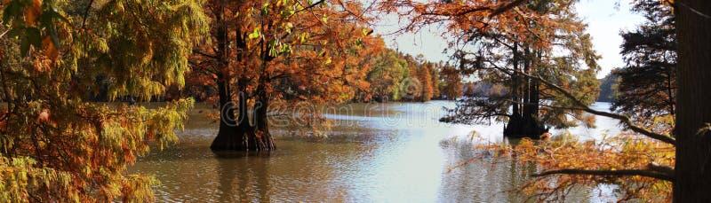 Alberi tarchiati di caduta e del lago immagini stock