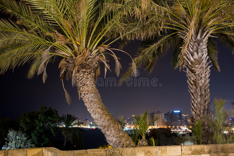 Alberi a Tel Aviv fotografia stock libera da diritti