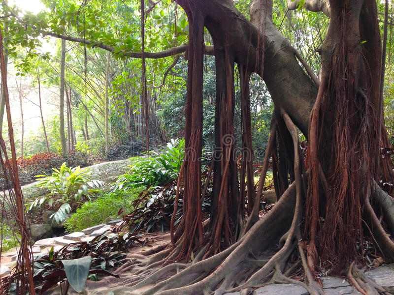 Alberi tropicali fotografie stock