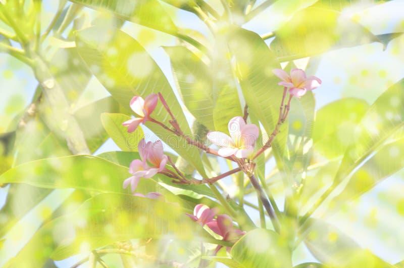 Alberi tropicali con i fiori immagini stock
