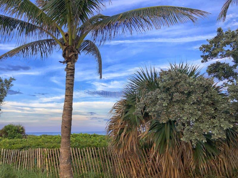 alberi tropicali di tramonto alla spiaggia fotografie stock libere da diritti
