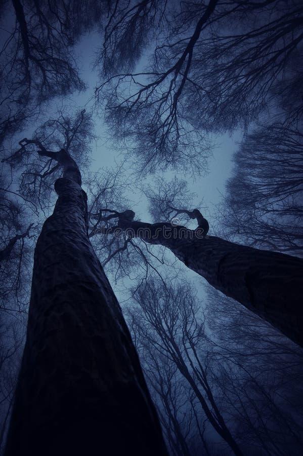 Alberi in una foresta spaventosa scura alla notte immagini stock libere da diritti