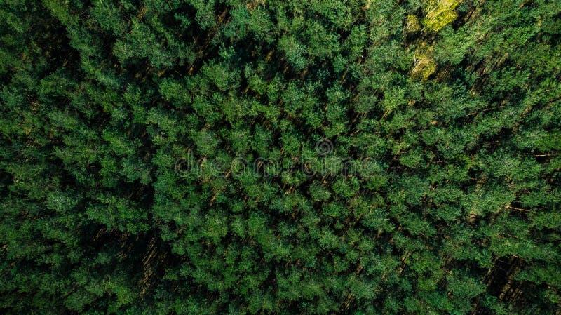 Alberi variopinti della molla in foresta, vista del fuco immagini stock libere da diritti