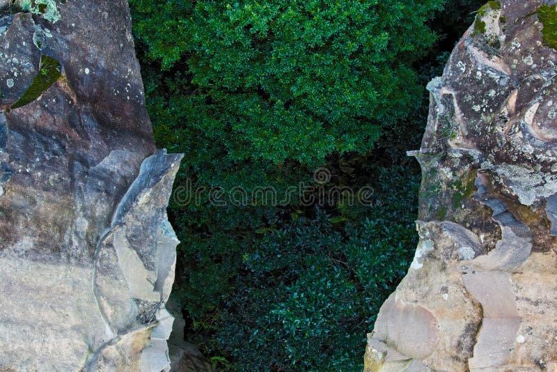 Alberi verdi in canyon fra due rocce irregolari immagine stock libera da diritti