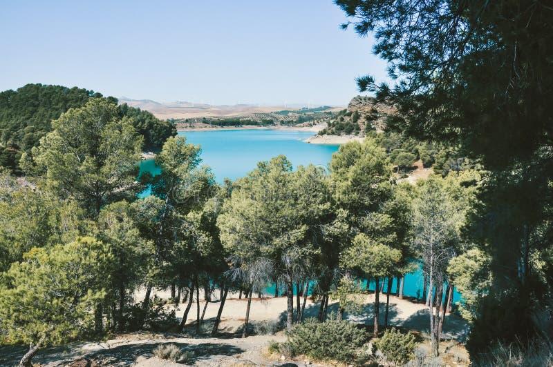 Alberi Verdi Con Acqua Blu Sotto Il Cielo Blu fotografia stock libera da diritti