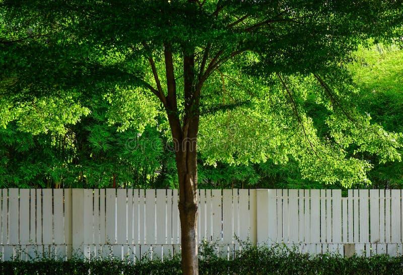 Alberi verdi con il recinto di legno bianco immagini stock libere da diritti