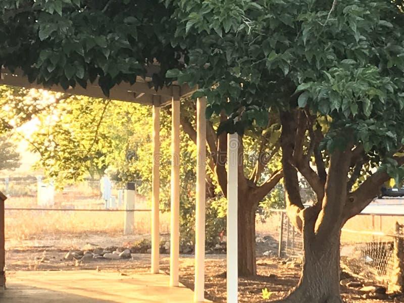 Alberi verdi conopy coprendo un carport semplice che riflette il sole di mattina immagini stock
