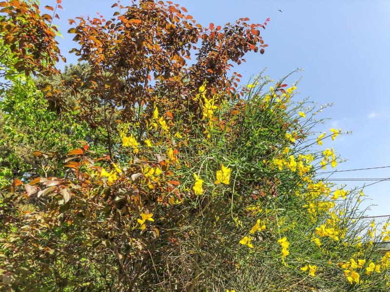 Alberi verdi del fiore nell'iarda della città nei agains suny di giorno il cielo Chiuda sul colpo immagini stock