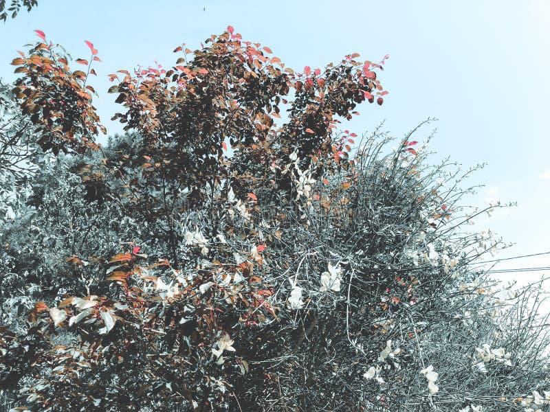 Alberi verdi del fiore nell'iarda della città nei agains suny di giorno il cielo Chiuda sul colpo fotografia stock libera da diritti