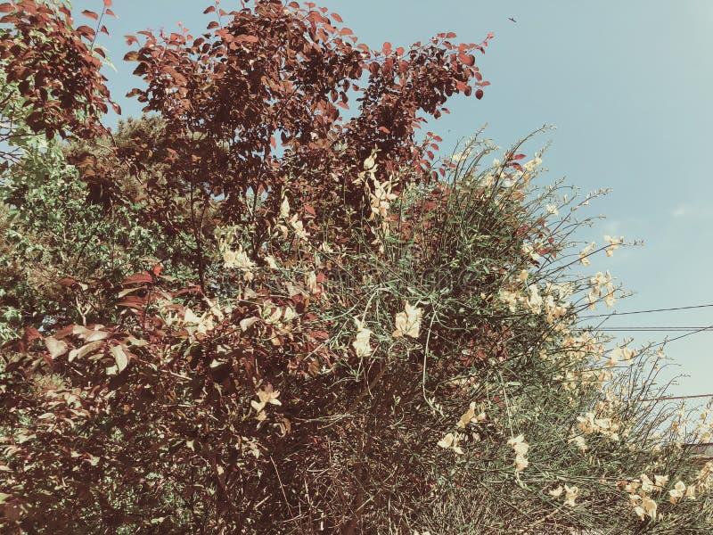 Alberi verdi del fiore nell'iarda della città nei agains suny di giorno il cielo Chiuda sul colpo fotografia stock