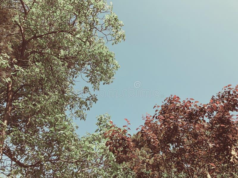 Alberi verdi del fiore nell'iarda della città nei agains suny di giorno il cielo Chiuda sul colpo fotografie stock libere da diritti