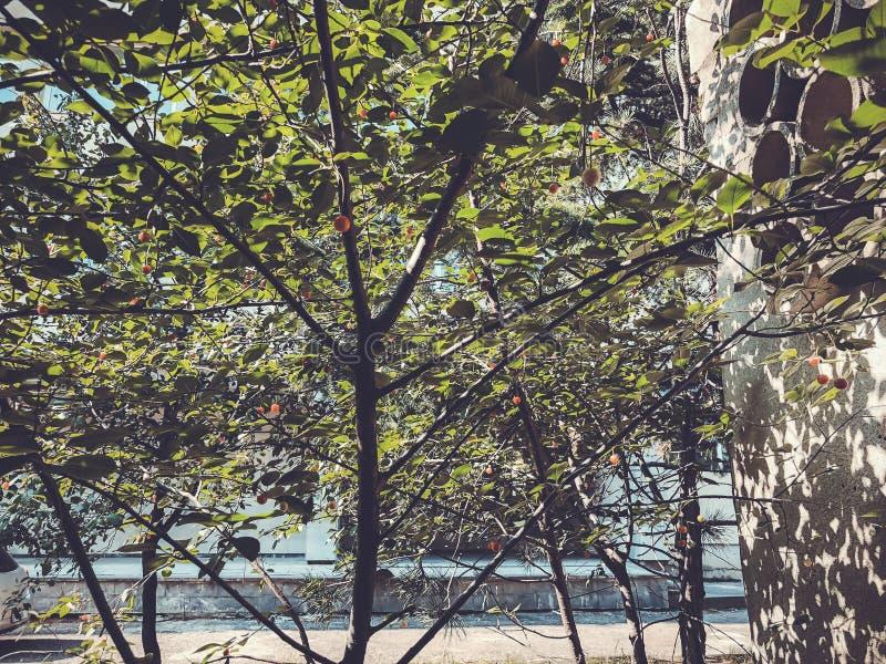 Alberi verdi del fiore nell'iarda della città nel giorno suny Chiuda sul colpo immagine stock libera da diritti